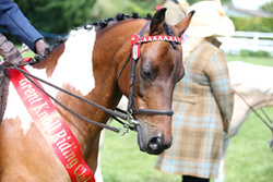 Brent Knoll RC Open Show, 2nd August 2015
