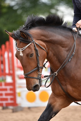Bicton BS & Unaffiliated Champs Show Sept 2015