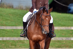 The NSEA Qualifiers at Bicton Arena  October 2016