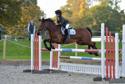 Bicton BS Show October 2017